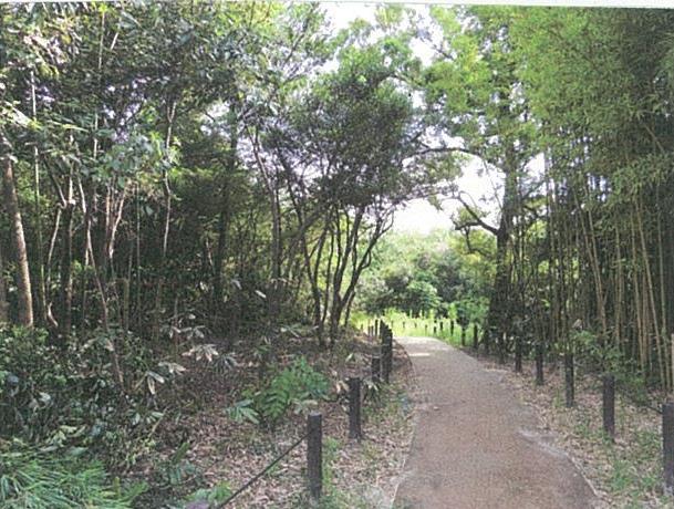 翠松園緑地の雑木林