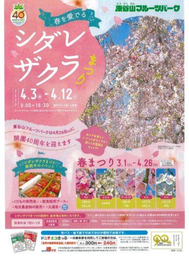 0403東谷山しだれ桜まつりのサムネイル