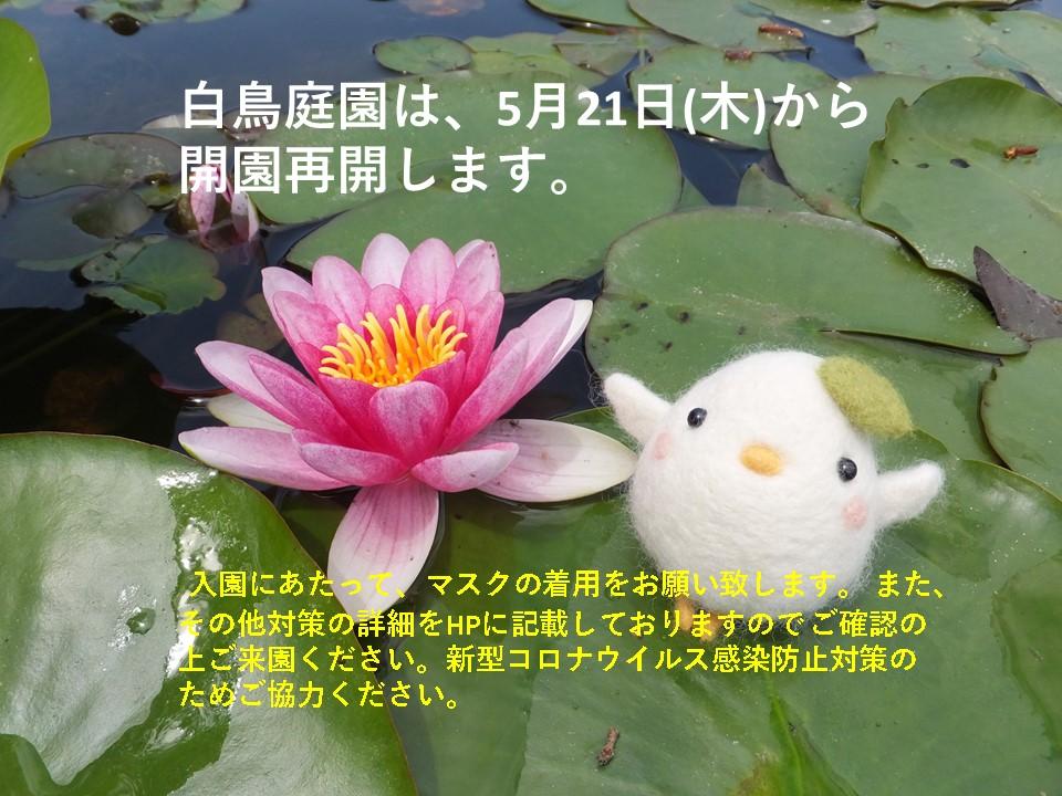 白鳥庭園 5/21(木)より開園します。