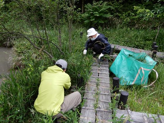 小幡緑地 せせらぎ湿地 トンボ池周辺下草刈り