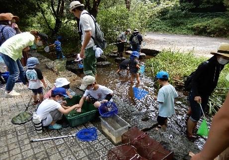 8月8日  白沢川でのガサガサ体験 小幡緑地 8月例会 自然観察会