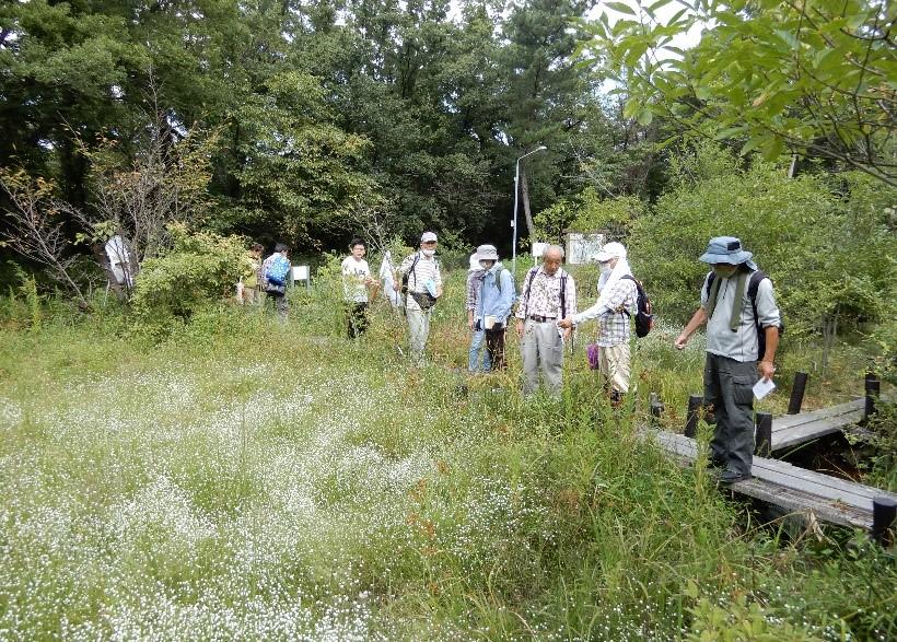 9月22日 小幡緑地でチョウの研修会 せせらぎ湿地 シラタマホシクサ